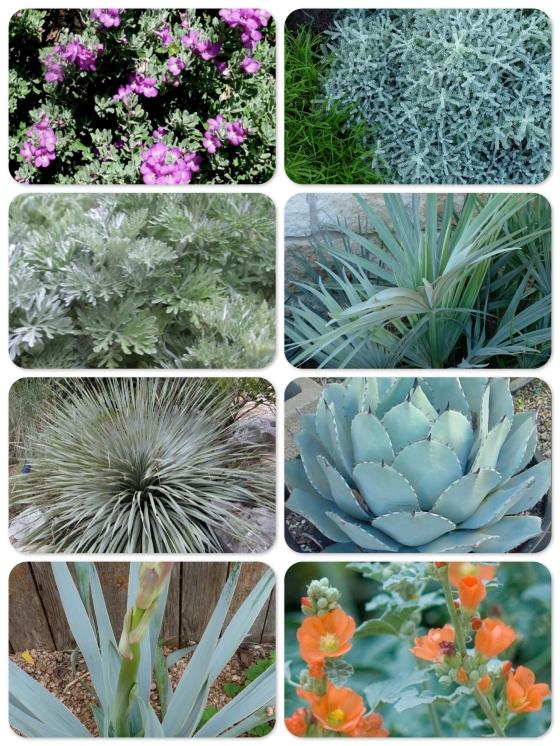 silverplants